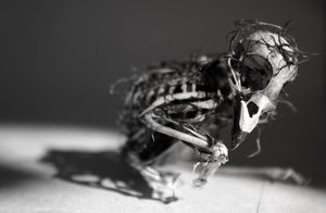 birdskeletonbycircumsonovates.jpg